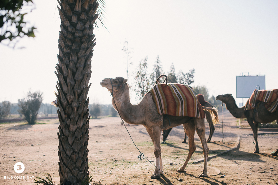 Marokko119